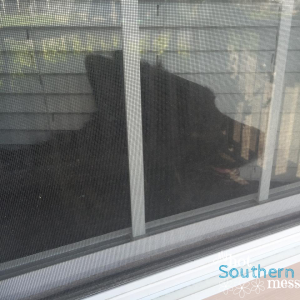 My Echo Bear | My Hot Southern Mess