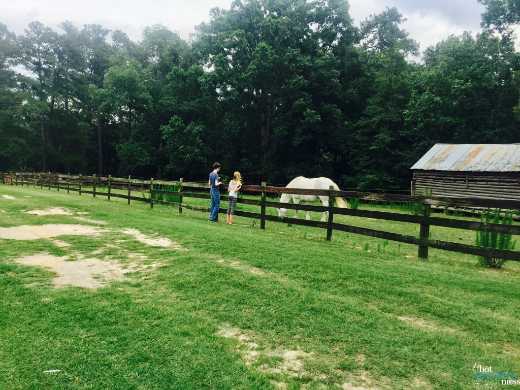 Gillis Hill Farm | My Hot Southern Mess